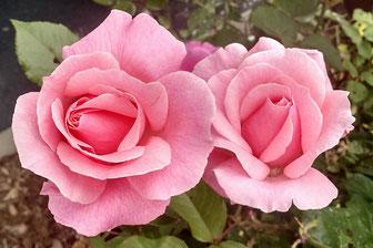 cosmétiques-raisin-québec-100%-naturels