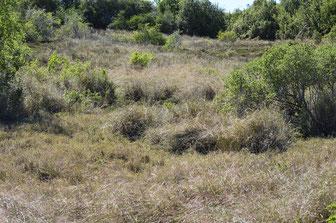 Addo, Südafrika - trockene Halbwüste