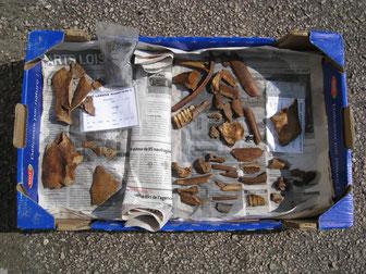 Tierknochen - Speisereste unserer Vorfahren