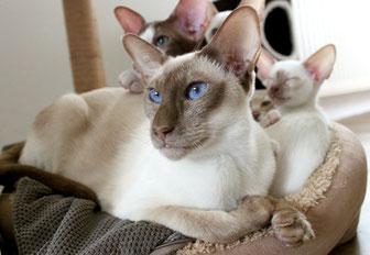 Wie alt werden Katzen? Katze mit ihren Kitten