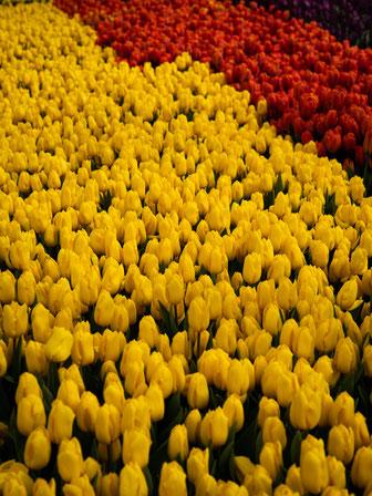 Blumenpracht im Inneren des Parks