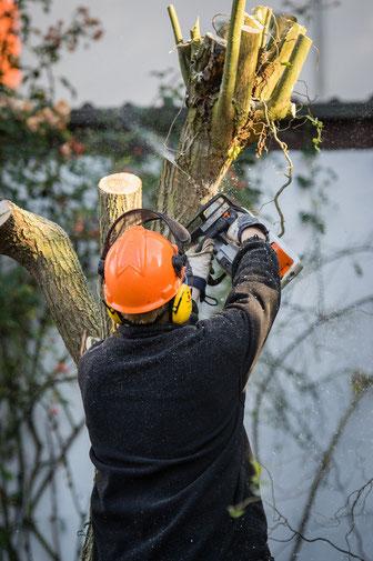 Hausmeisterservice Wüstefeld (Northeim - Moringen): Baumschnitt, Baumfällungen