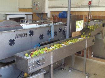 Nach dem Waschen gehen die Äpfel in die Presse ...