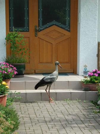 Geretteter Jungstorch steht vor unserer Haustür. Foto: Ulrike Mose