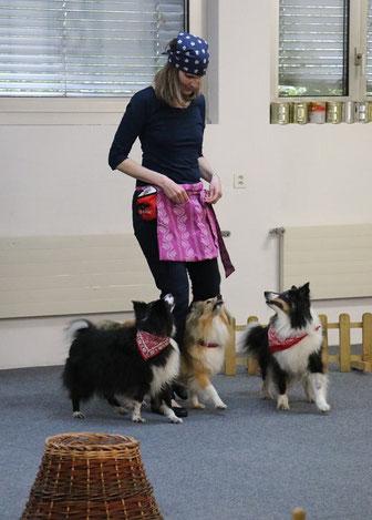 Dog Dance, Baselland, Clickertraining, Trickdog Training, DD, Kurs, Plauschgruppe mit Hund