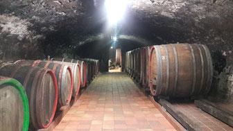 Weinprobe mit Wanderung inklusive Kellerbesichtigung an der Ahr