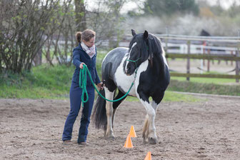 """My pony """"Maybe"""" hates repetition. She gets easily bored and disconnects. For her I need to work in short and interesting sequences."""