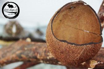 Kokosschale