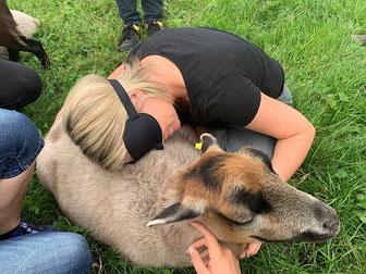 Praktische Übungen in der Fachkraftweiterbildung zur Tiergestützten Arbeit von Andrea Göhring.