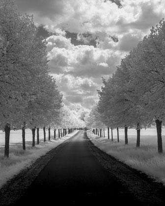Infrarotfotografie, Uckermark, Infrarot, Holger Nimtz, Infrared, Fotografie, Photography, Infrarotaufnahme, moderne, Fotokunst, Bäume, trees, Wood-Effekt,