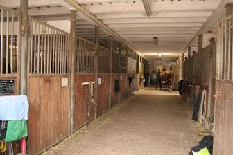 Großer Stall mit 20 Boxen