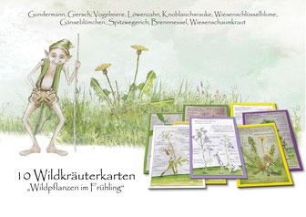 Wildkräuterkarten, Gundermann, Giersch, Vogelmiere, Löwenzahn, Knoblauchsrauke, Wiesenschlüsselblume, Gänseblümchen, Schlüsselblume, Spitzwegerich, Brennnessel, Wiesenschaumkraut