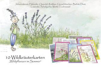 Wildkräuterkarten, Johanniskraut, Holunder, Quendel, Dost, Rotklee, Beifuß, Schafgarbe, Weiße Taubnessel