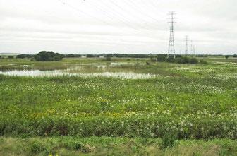 雨期の渡良瀬遊水地を撮った画像