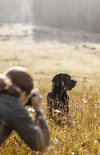 Halterin die Ihren braunen Labrador in einer Blumenwiese  fotografiert beim Coaching mit der Ostschweizer Hunde Fotografin Monkeyjolie