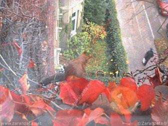 Kleines Eichhörnchen vor dem Fenster