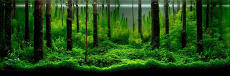 Bonsai Aquarium