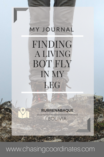 bot fly blog
