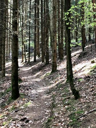 Pfad - Weg - wandern - Corona - Lahr
