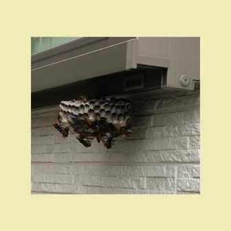 窓サッシの真下に蜂の巣があり10匹ぐらいアシナガバチがいる写真