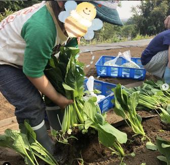 近所の農家で野菜の収穫