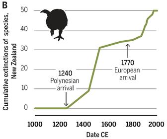 Aussterben Vögel Neuseeland
