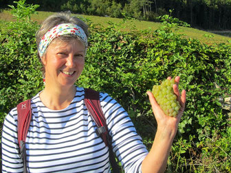guided tours Beaune, Burgundy, Burgundian vineyards