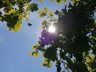 Himmel, Verantwortung, Blätter, Sonne, Tor zur Welt, Meisterschaft