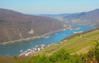 Hoch auf dem Rheinsteig –Blick auf Assmannshausen. Foto: C. Schumann, 2017