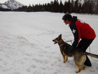 雪崩救助犬