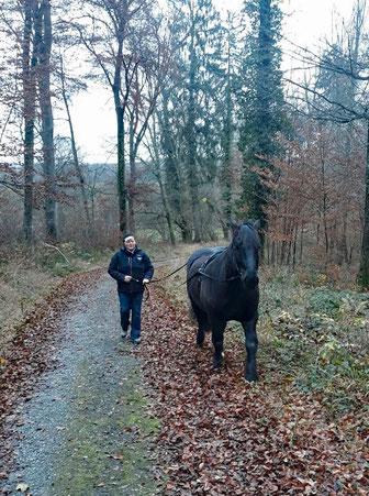 Mit Willi am Langen Zügel im Gelände