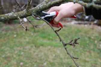 Die Obstbäume können bereits geschnitten werden.  Foto: Landschaftspflegeverband Neumarkt i.d.OPf.e.V.