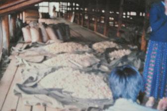 アーロール生産 アルハンガイ県イフタミル郡の乳製品工場で(1986年6月)