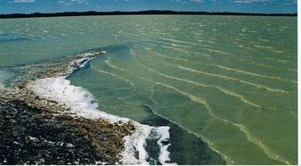 ガンガ湖 面積は4平方㌔、白鳥など渡り鳥が群れることで有名な湖(スフバートル県ダリガンガ郡)