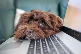 Onlineberatung ist überall möglich