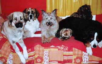Shania, Ginger, Kessy, klein Luna, Balou und hinten Merlin