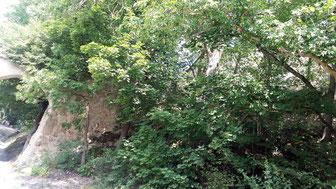 Burg Stefling, Vorburg