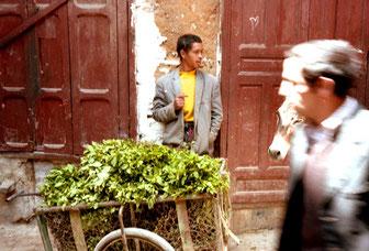 frische Minzblätter für den marokkanischen Minz-Tee