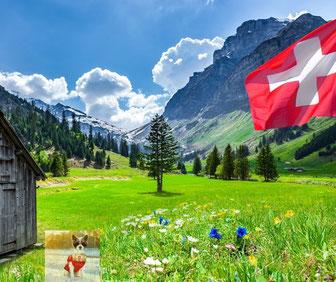 Paysage de montagne suisse avec chien amusant.