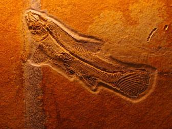 ein Beispiel der Schöpfung - 150 Mio Jahre alt