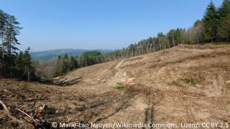 Abb. 1: Kahlschlagfläche in einem mitteleuropäischen Waldgebiet bei Saint-Victor-Montvianeix (Auvergne, Frankreich).