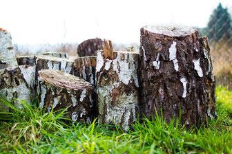 Birke, Holz, Stamm, Baum, Birkenzucker, Xylitol