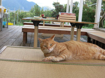 農園の猫、大事に飼っています。とてもいい猫、トラ大好き!