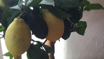Zitrone tut der Leber gut -- Helga Graef