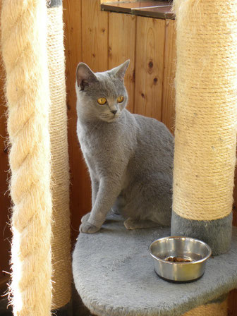 Bonnie, fast 2 Jahre (Foto: 2.6.2014)