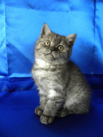 Lilly im Alter von 11 Wochen
