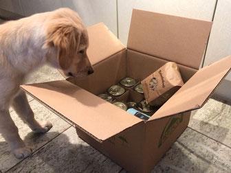 Reico Tierfutter Bestellung und Lieferung - Reico Hundefutter und Katzenfutter Bestellungen bei Reico Vertriebspartner Ronny Rißmann.