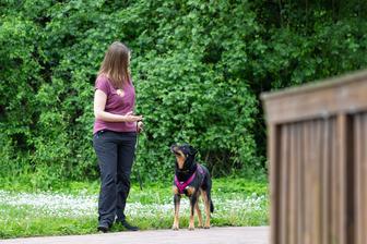 Hundesommer - Hundetraining & Hundetrainer Miriam Hack