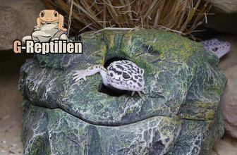 Leopardgecko Terrarium Wet-Box Wetbox feuchte Höhle Versteck