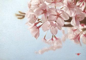 「はるのいろ-桜」油彩キャンバス SM